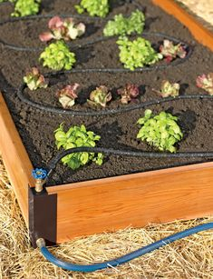 Aquacorner raised bed soaker system - I need to look into this