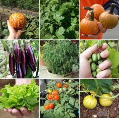 Heirloom Patio Container Miniature Vegetable Seed Collection 9 Varieties