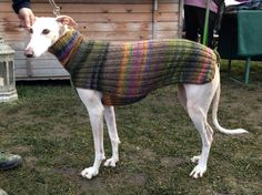 Custom Galgo & Greyhound Sweater / Jumper / many by GoodWitKnit Keeping beautiful sighthounds cosy in winter