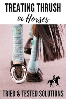 Treating Thrush in Horses | Savvy Horsewoman | DIY Horse Care