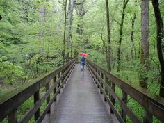 Mammoth Cave National Park, Kentucky - The most leisurely hike we've ever taken as a family.