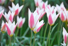 10 best spring bulbs - The Washington Post