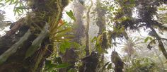 Uniquely complete, thus very valuable to learn with, cloud rainforest in Equador, Los Cedros Under Threat – Films with Geoff Lawton & others explaining, with protecting ways to help...