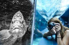 """Another """"Catch the moment"""" @Cretaquarium @VisitGreecegr @destination_c @DiscoverGRcom @CreteRegion #cretaquarium"""