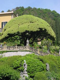 Villa Balbianello. Guido Monzino (last owner) used to have the gardeners climb in those trees to trim from the inside. Weird dude.