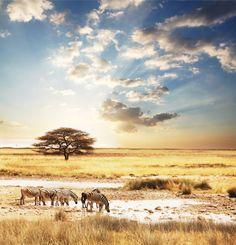 A África do Sul está abaixo da linha do Equador, por isso as estações do ano são opostas às estações da América do Norte: o verão é entre novembro e março (com o pico em dezembro e janeiro) e o inverno é entre maio e agosto