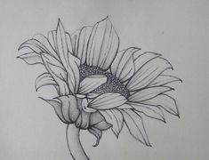 sketch to paint Sunflower Sketches, Sunflower Drawing, Painting Patterns, Fabric Painting, Pencil Drawings Of Flowers, Pencil Drawing Tutorials, Tattoo Drawings, Art Drawings, Landscape Drawings