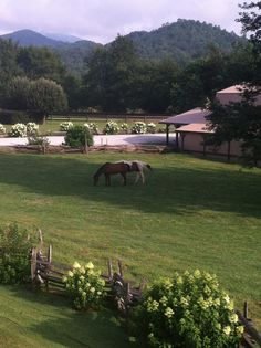 North Georgia Mountains - The Dillard House - some fine eating but also a lovely inn and stables in a pristine country setting.  Dillard, GA.