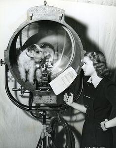 Ingrid Bergman on the set of Intermezzo ( 1936 )