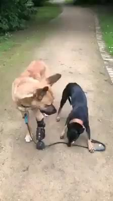 Cute Funny Dogs, Cute Funny Animals, Funny Dog Memes, Cute Animal Videos, Cute Animal Pictures, Cute Dogs And Puppies, Doggies, Cute Little Animals, Animals Beautiful