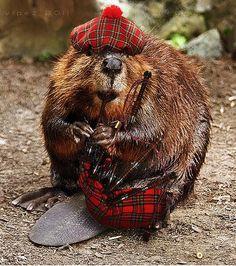 Celtic Lore Animal Series - The Beaver