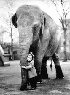 Unlikely friends, London Zoo, 1958. Photograph by Edward Grossi.