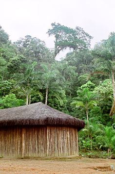 casa guarani na aldeia rio siveira com fechamento de madeira e cobertura vegetal