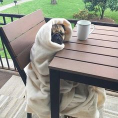 Must be Monday  Follow @itsdougthepug - Tag #TheTomCoteShow your pug pics for a…