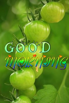 Morning Greetings Quotes, Good Morning Messages, Good Morning Good Night, Good Night Quotes, Good Morning Images, Happy Weekend Images, Amazing Nature, Diwali, New Day