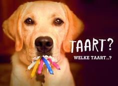 Cards - birthday man - funny m Happy Birthday Labrador, Happy Birthday Funny, Man Birthday, Birthday Quotes, Birthday Wishes, Cute Promposals, Bday Cards, Dog Signs, Happy B Day