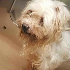 NORBERT -A1091112 -  TO BE DESTROYED TODAY 9/27/16- AVAILABLE AT MANHATTAN ACC.