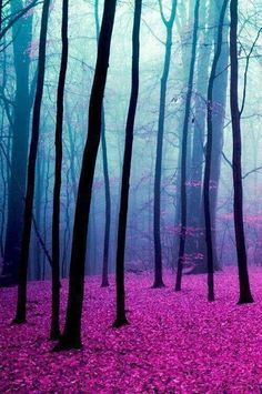 """Magic Forest"" by Elise Enchanted. A late autumn forest scene done in the rose pink, purple and blue bisexual pride colors "" OMG you mean it's intentional? Foto Nature, All Nature, Pink Nature, Amazing Nature, Beautiful World, Beautiful Places, Beautiful Pictures, Beautiful Forest, Beautiful Scenery"