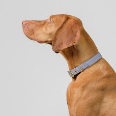 Storm Grey + Brass All Weather Dog Collar // Buckle Collar // Canvas Dog Collar - Classic dog collar Living With Dogs, Pet Supply Stores, Large Animals, Vizsla, Canvas Fabric, Animal Rescue, Pet Supplies, Your Dog, Collars
