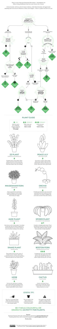 INFOGRAPHIC: Which indoor plant is right for you? | Inhabitat - Sustainable Design Innovation, Eco Architecture, Green Building