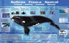 infografia del delfin - Google Search