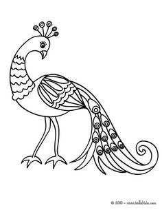 Cute peafowl coloring page