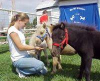 Blue Sky Miniature Horse Farm--Hays, KS