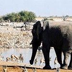 One of Africa's Gems: Etosha National Park, Namibia