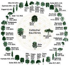 Der keltische Baumkalender ist vor ca. 2000 Jahren entstanden. Die Druiden nutzten zur Berechnung eines Jahres einen Mondkalender aus 13 Monaten.Hier mehr!