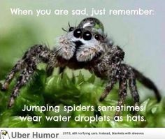 Funny pictures about Something To Remember If You Feel Sad. Oh, and cool pics about Something To Remember If You Feel Sad. Also, Something To Remember If You Feel Sad photos. Animal Memes, Funny Animals, Cute Animals, Animal Humor, Unusual Animals, Happy Animals, Feeling Sad, How Are You Feeling, Animal Pictures