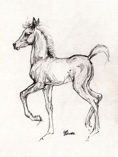 Horse Drawing - Arabian Foal Drawing 31 07 2013 by Angel  Tarantella