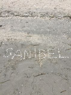 Sea Shell Beach Florida