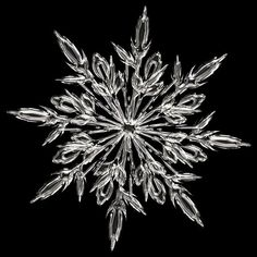Snowflake-- I really like the shape of this snowflake.