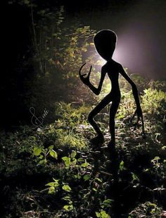 Alien shadowed at night Aliens And Ufos, Ancient Aliens, Astronomy Photography, Alien Photos, Alien Halloween, Alien Aesthetic, Grey Alien, 70s Sci Fi Art, Alien Abduction
