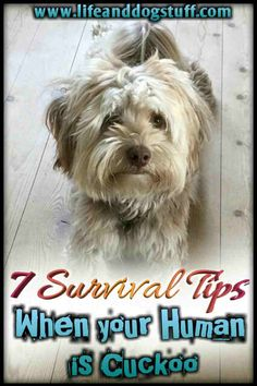 7 Survival Tips When Your Human Is Cuckoo written by my dog, Buffy.