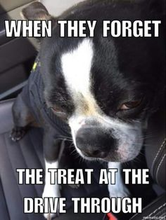 The Boston we had as a kid used to look like this when the lady at the Bank drive through was out of treats, so my Mom would take one with her.
