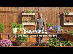 Βασιλικός: 10 μυστικά για τη φροντίδα του - Τα Μυστικά του Κήπου