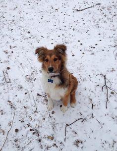 OTSC - Fergus, 4 months