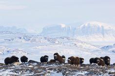 Grønlands Natur