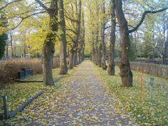 malmin hautausmaa - Google-haku Malm, Country Roads, Google, Plants, Plant, Planets