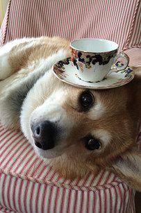The Corgi Who Got Stuck in a Slice of Bread Corgi Funny, Cute Corgi, Corgi Dog, Cute Puppies, Corgi Pictures, Cute Dog Pictures, Animals And Pets, Baby Animals, Pembroke Welsh Corgi
