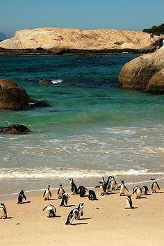Boulders Beach in Simons Town - South Africa (to see these penguins of course! Oh The Places You'll Go, Places To Visit, Boulder Beach, Sea And Ocean, Animals Of The World, Africa Travel, Great View, So Little Time, Bouldering