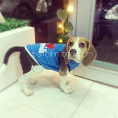 "INK361 - Photo - Tara, #beagle bebé, con esqueleto ""Yo ❤ a mamá""."