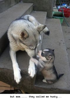 but mom they called me huskey!!!