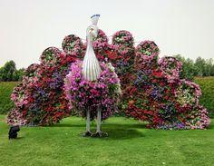 Amazing pictures of Dubai Miracle Garden - Sooper Cool