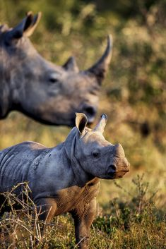 Every Single - Happy World Rhino Day, lets not forget that every single rhino counts