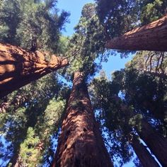 Sequoia & Kings Canyon National Park - Three Rivers, CA, United States... yelp: good for info!