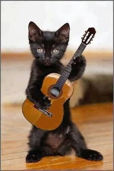 The Guitar Playing Kitty