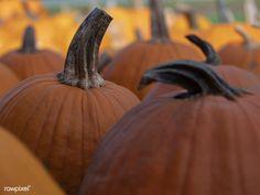Closeup of fresh pumpkins at a market | free image by rawpixel.com / Aaron Burden Halloween Celebration, Halloween 2018, Royalty Free Photos, Pumpkins, Close Up, Printables, Fresh, Autumn, Fall