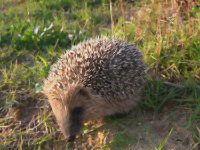 Listado de las fotos de mamíferos